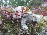 """How about """"Slowy"""" .....our garden turtle creature?☺☺"""