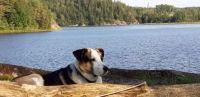 Hund am See/Schweden