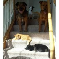 When your dogs mysteriously disappears, blame the stair cats.