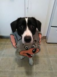 You aren't gonna make me wear this on our walk, are you?