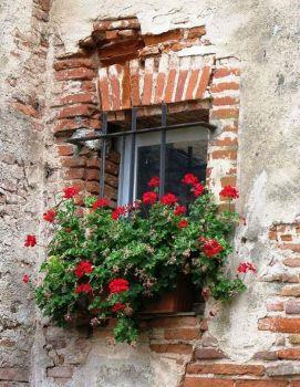 Planted Window
