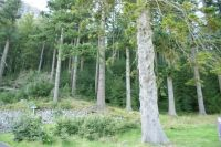 The Ghost Trees of Thirlmere