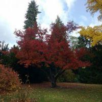 Podzim v Opočně