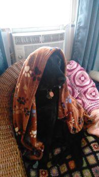 Nadia's New Christmas Blanket