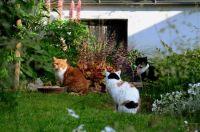 Kočky na zahrádce