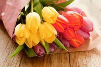 Tulips_JPG