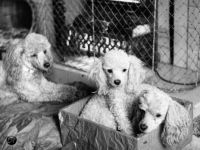 Mother's dogs, 1964