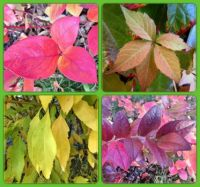 Colorful autumn, Barevný podzim