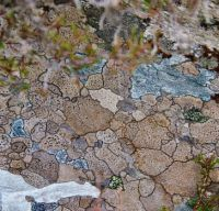 1500s map of Europe? ... no, lichen on a rock!
