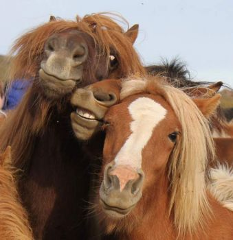 After a few Picklebacks on Ladies Night, the girls always pose for selfies...
