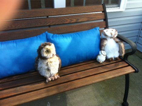 Patio 3 Owls on a Bench 6-2-13