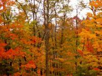 Autumn's Colours