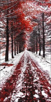 Red Path and Snow