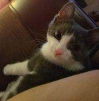 Cass as a Kitten