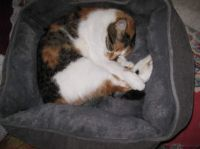 Chloe is settling into her new bed