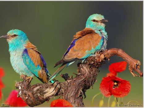 Beautiful colored birds