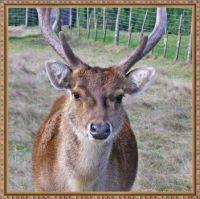 A deer little friend.