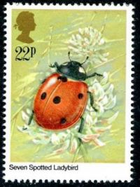"""Themes """" Insects """" - Ladybird"""