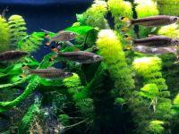 GA Aquarium 3