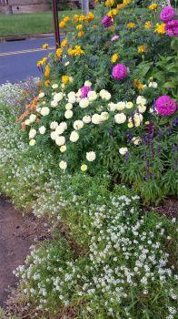 Streetside bouquet
