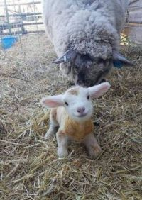 15-minutes old