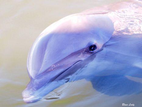 Dolphin Research Center Grassy Key Florida