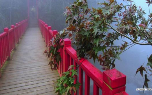 Bridge in Foggy...