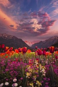 Wildflowers and mountainscape