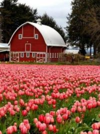 Themes: Barn With A Flower Field
