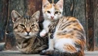 October 16 is National Feral Cat Day