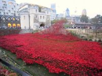 Another shot of those Ceramic Poppies at the Tower of London10350506_313604445507048_57120137642335587_n