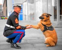 Lucca, the retired US Marine Corps Dog