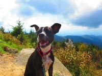 Brody in the Blue Ridge Mtns