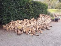 Oh No... The woodpile fell over