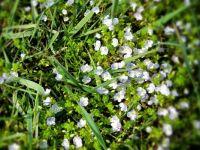 spring flowers - hard