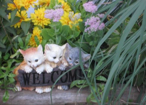 My furry friends WELCOME our visitors.