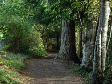 Westwood Wood