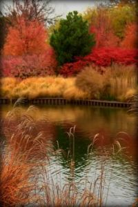 Autumn River Colors