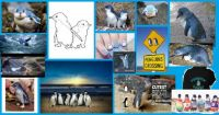 All Things Blue - Little Blue Penguins