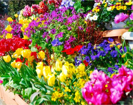 colorful flowers!!!!