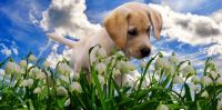 Puppy meeting flowers