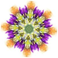 Sweet Wildflowers 🌺🌸