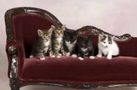 cute kitties 2