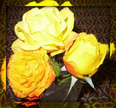 My yellow trio. . . . .