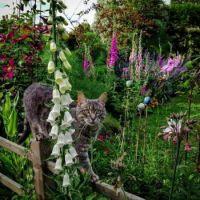 Exploring the flower garden....