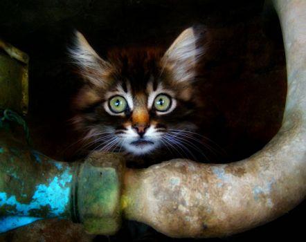 Theme Week: Marrakesh Kitty