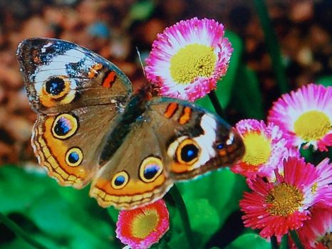 a flutterby, & flowers go together!!!!