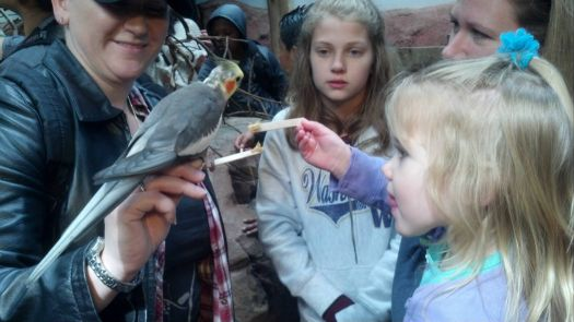 My youngest granddaughter feeding the birds