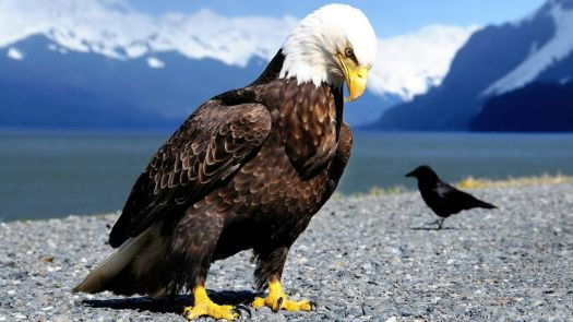 The eagle has landed..................!!