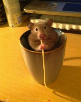 Just a hamster in a mug, eating a single strand of tasty pasta.